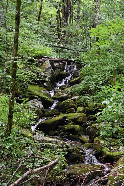 Big Ivy stream
